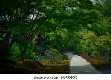 beautiful background road in forest.