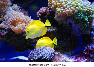 Beautiful background of the underwater world. Underwater scene with coral reef and tropical fish