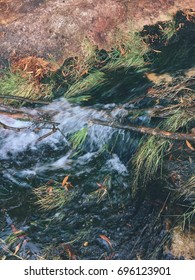 Beautiful background of the water stream in a forest