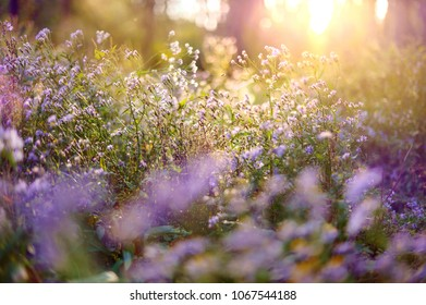 Beautiful background of wild flowers in the forest in violet colors