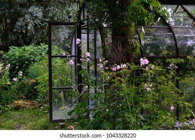 Beautiful backyard glass greenhouse with open door in summer garden surrounded by tree mallows