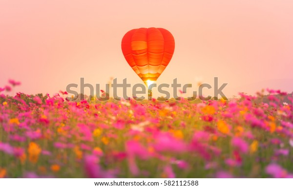Beautiful balloon and flower in park.