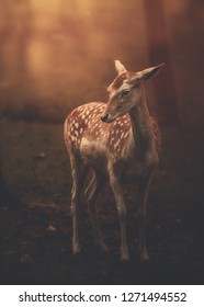 Beautiful bambi deer outdoor red background