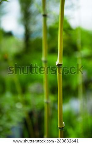 Congratulate, Asian garden hoe think, that
