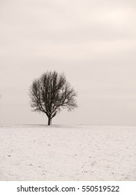 Beautiful bare apple tree standing alone in a snow covered winter landscape.
