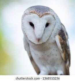 Beautiful Barn Owl outside in nature during the day