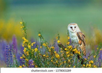 beautiful barn owl perched on a stump in meadow with many colorful flowers