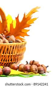 Beautiful basket full of autumn acorns, cones and chestnuts