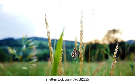 The beautiful batterfly on the stalk of spikes