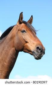 Beautiful bay horse portrait on sky background