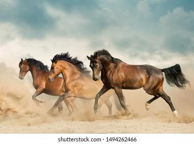 Beautiful bay horses running in desert on freedom