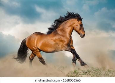Beautiful bay stallion running in dust under stormy skies