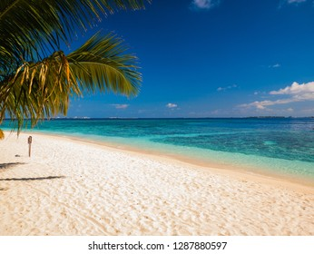 beautiful beach clean water white sand and coconut  trees, Maldives