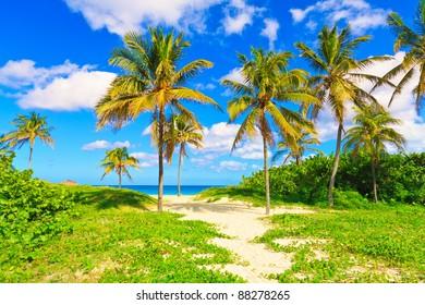 Beautiful beach in Cuba