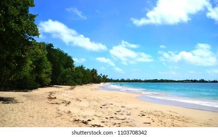 Beautiful beach of Les Salines, Martinique island, Lesser Antilles