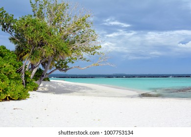 Beautiful beach in Maldives with exotic vegetation and blue water