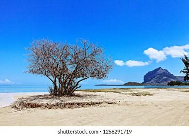 beautiful beach at mauritius island