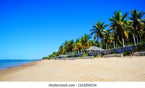 Beautiful  beach with palm trees in  Arraial d'Ajuda, near Porto Seguro, Bahia, Brazil