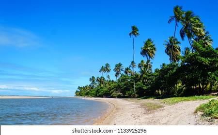 Beautiful beach with palm trees at Salinas, Maragogi, state of Alagoas, Brazil