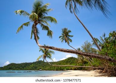 Beautiful beach with palm trees and beautiful sea at Ao Kao, Koh Mak island, Trat, Thailand