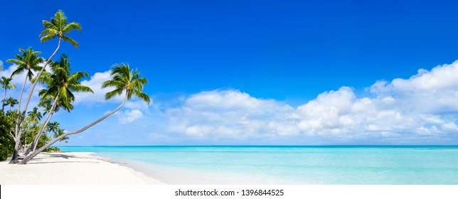 Beautiful beach with palm trees and turquoise water as background image
