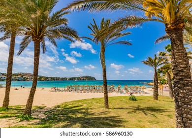 Beautiful beach scenery with tropical palms in Santa Ponsa, Spain Majorca, Balearic Islands.