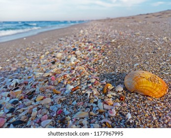 a beautiful beach with beautiful sea shells that has great colors. the beach is blended in the background with the shore making a beautiful background.