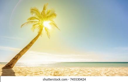 Beautiful beach, sun and palm. Selective focus. Wallpaper.