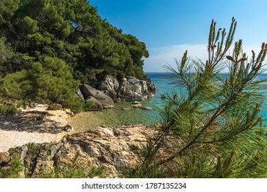 Beautiful beach surrounded by coniferous forest on the Rab island near Uvala Cifnata, Croatia. Transparent water on Adriatic coast. Rab island - touristic destination.