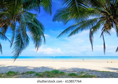 Beautiful beach. View of nice tropical beach with palms around. Holiday and vacation concept. Tropical beach. A palm tree bends over an empty sandy beach on Seychelles islands. Mahe, Anse Soleil