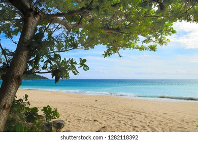 A beautiful beach view with tree around.