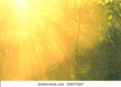 Beautiful beams of sun in the forest, close up