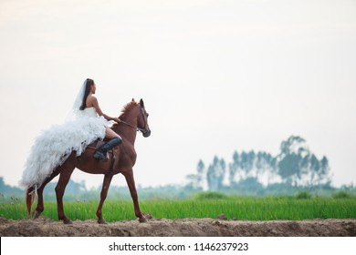 beautiful beauty bride in fashion white bridal wedding costume riding on strong muscular horse on rural countryside background