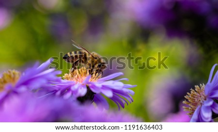 Beautiful bee photo with autumn colors and bokeh