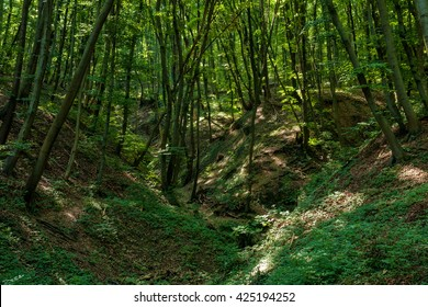 Beautiful beech forest at spring