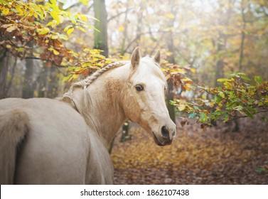 beautiful beige horse in autumn nature - Shutterstock ID 1862107438