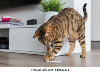 Fotos, imágenes y otros productos fotográficos de stock sobre Cat