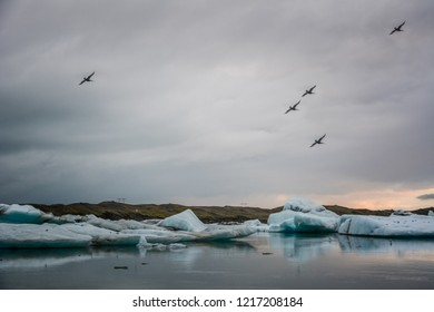 Beautiful big blue iceberg floating in Jokulsarlon glacial, Iceland in summer at dusk, reflecting in the water and birds flying, background in slight motion blur.