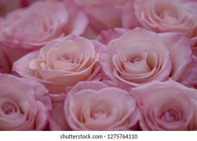 beautiful big bouquet of pink roses