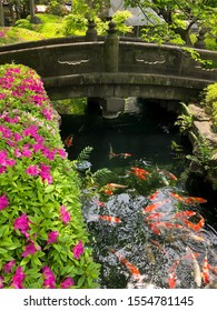 Beautiful Big Fish Carp - Koi.  Floating in beautiful clear water against the backdrop of a lovely stone bridge.
