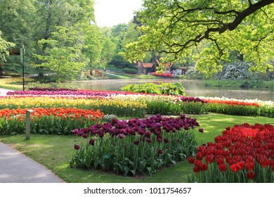 a beautiful big garden full of groups colorful tulips and other flowers in spring