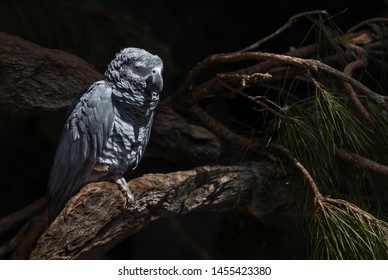Beautiful big grey parrot stay on the tree