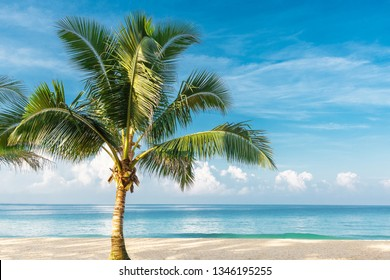 Beautiful big palm tree on the seashore. Coconut tropical tree on the beach of the ocean.Sunny day on seashore for relaxation. Concept design, decoration wallpaper, cards, calendars, backgrounds.