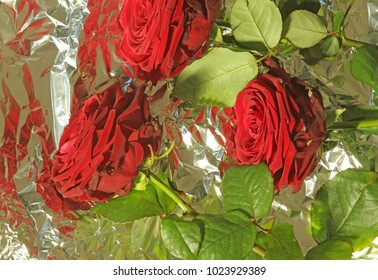 Beautiful big red roses on silver metal foil