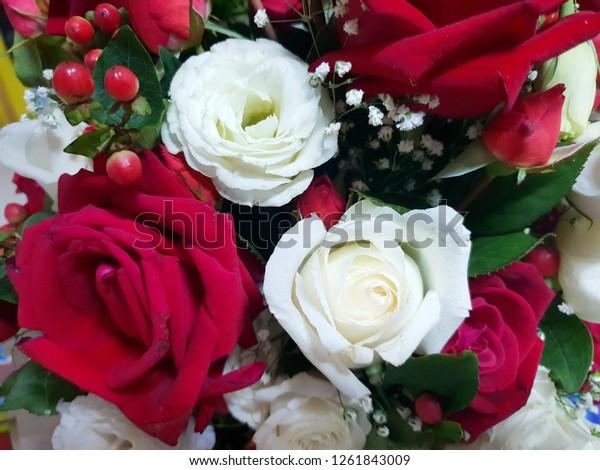 Beautiful Big Roses Flower Pink Roses Stock Photo Edit Now