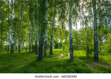 In a beautiful birch grove on a summer day with gentle backlighting.