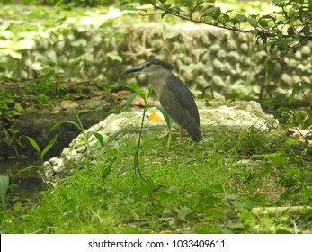 Beautiful Bird, Alipore Zoological Garden, Alipore, Kolkata