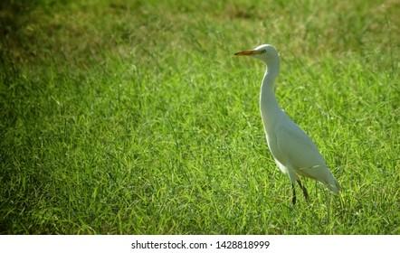 Beautiful bird between the grass