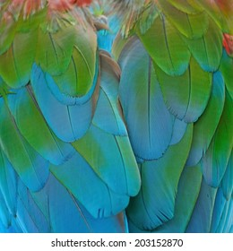 Beautiful bird feathers background of Greenwinged Macaw feathers pattern
