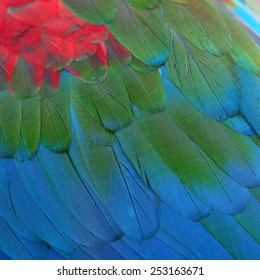 Beautiful bird feathers, Greenwinged Macaw feathers pattern background